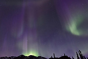 The aurora borealis (northern lights) as seen from inside Denali National Park, Alaska.