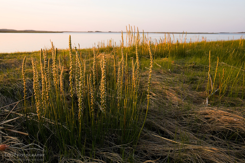 Salt marsh in spring.  Strawberry Hill Preserve in Ipswich, Massachusetts.  Eagle Hill River.