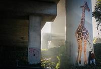 Dan Fontes painted the Giraffe Murals near MacAurthur Blvd. and Oakland Avenue.