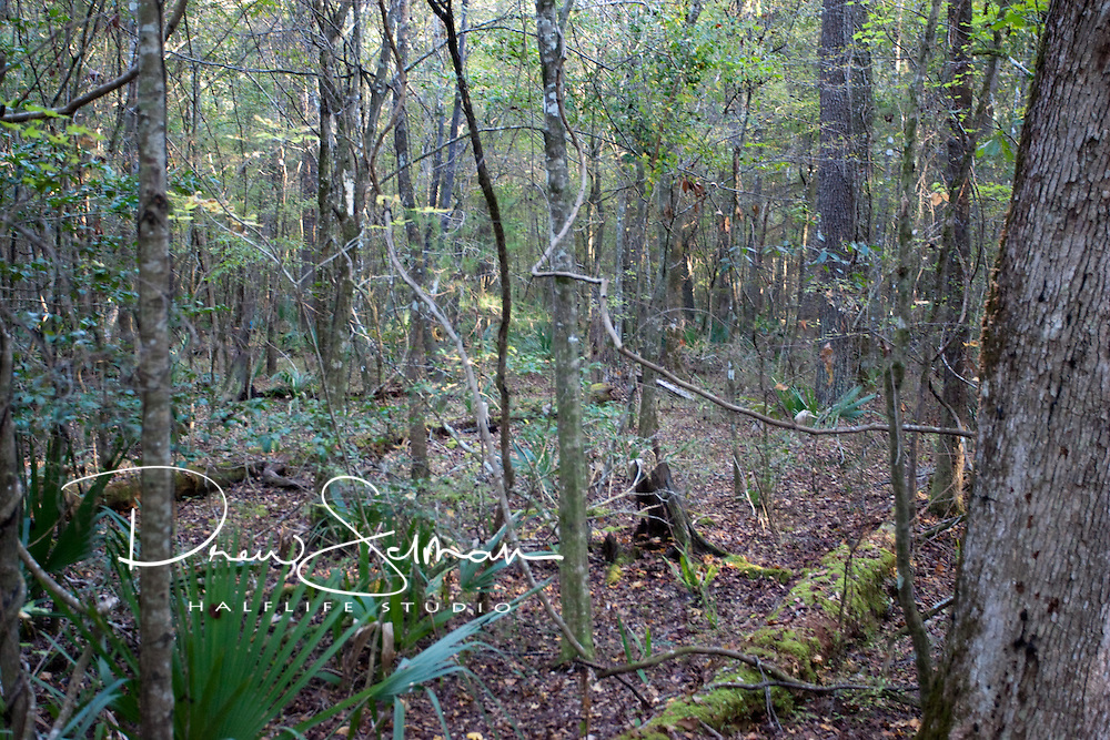 Sights and sounds from  a real swamp  in South Carolina