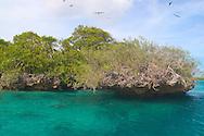 Aldabra Atoll, The Seychelles<br /> Frigate birds, emerald lagoon and<br /> 'champignon' rock formations<br /> c. Ellen Rooney