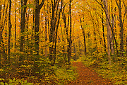 Path in the Acadian forest in autumn foliage. <br />