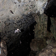 The Grutas de Lanquin, famous for the hordes of bats that make daily migrations in and out of the cave system. Lanquin, Guatemala, July 2009. (Photo/William Brrne Drumm)