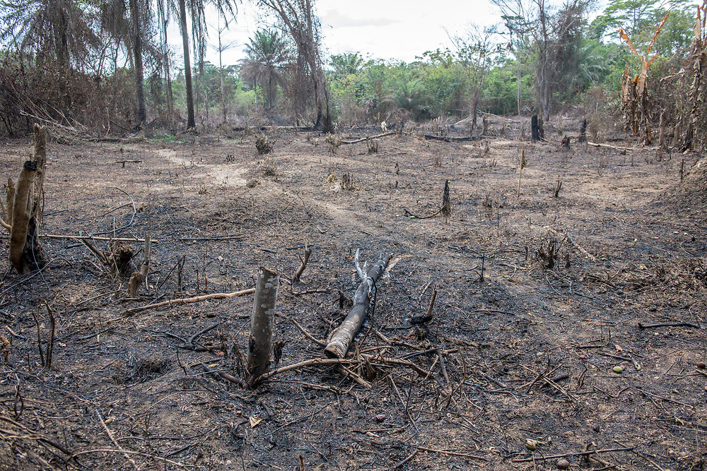 Tree slashed and burned for agricultural purposes in Ganta, Liberia