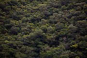 Santana do Riacho_MG, Brasil...Arvores de uma floresta...Trees in a forest...Foto: LEO DRUMOND / NITRO