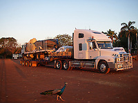 Peacock and truck in the Great Sandy desert