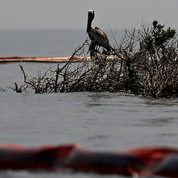 Layers of oil containment boom have been placed around the pelican nesting grounds at Cat Island off the coast of Louisiana on Thursday, June 17 2010. Oil from the Deepwater Horizon spill continues to impact areas across the coast of gulf states.
