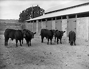 12/08/1959<br />