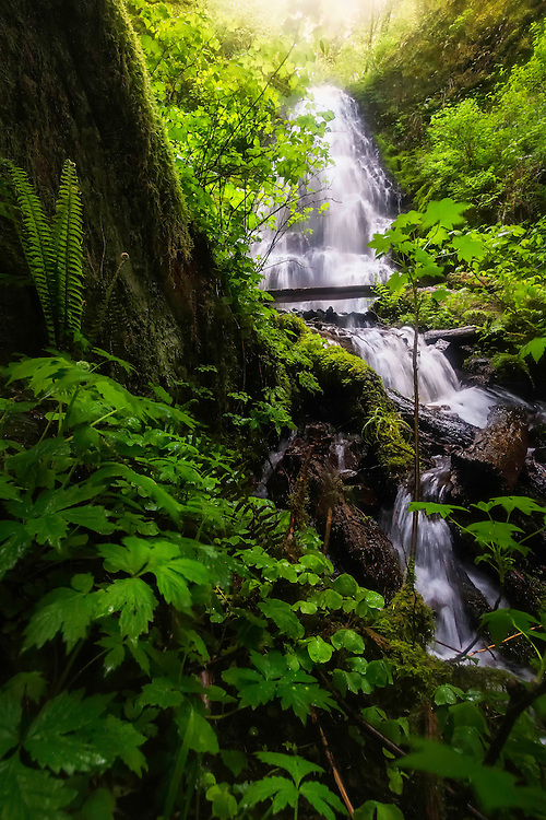 Fairy falls flows and meanders its way through the dense Pacific Northwest forests in what some would consider a land that fairytales are made from.