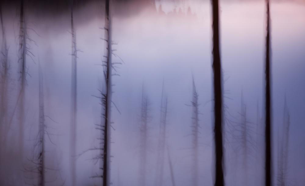Twilight Forest, Yosemite National Park, California