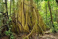Rainforest at Yasuni National Park, Napo Wildlife Center, Quichua Community, Amazonia, Ecuador