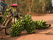 A man loads his bicycle with bananas to take to market, Rwanda.