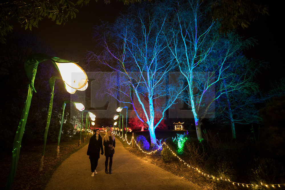 © Licensed to London News Pictures. 30/11/2017. London, UK. Visitors admire the illuminated snowdrops at RHS Wisley Gardens. Trees and plants are illuminated at Royal Horticulture Society Wisley Gardens for the Christmas Glow. Hundreds of different lights can be seen when following the trail throughout the gardens opening 1 December 2017 – 3 January 2018. Photo credit: Peter Macdiarmid/LNP