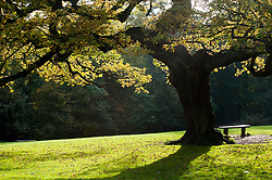 """A quiet Spot"" Autumn Trees Endcliffe Park Sheffield<br />