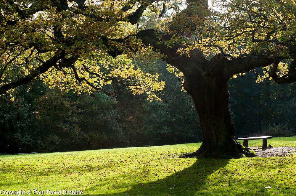 &quot;A quiet Spot&quot; Autumn Trees Endcliffe Park Sheffield<br /> 21 October 2012<br /> Image &copy; Paul David Drabble
