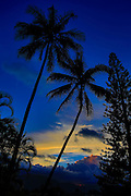 Coconut Palm Tree, Sunset, Hawaii
