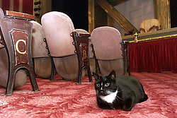 Feature on Theatre Cats in the west End. Boy cat (white nose) and girl cat 2000, December 24, 2000. Photo by Andrew Parsons/i-Images.