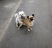 Two dogs in a Beijing Hutong.
