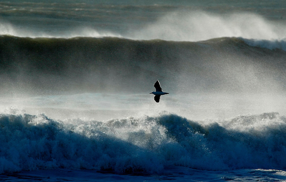 A seagull wings its way over rough surf along the coastline, Taranaki, New Zealand,  December 24, 2003. Credit:SNPA / Rob Tucker