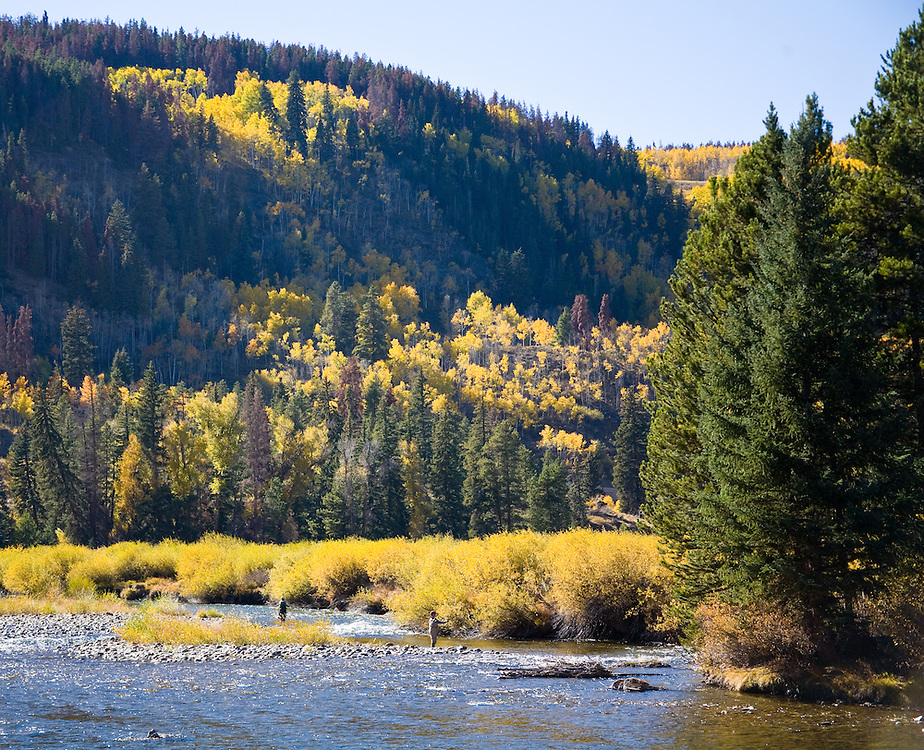 Summit County, Colorado:  Fly fishing on the upper Blue River in September.