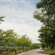 Rural Hwy 109 leading to Meinong. Meinong Township, Kaohsiung County, Taiwan