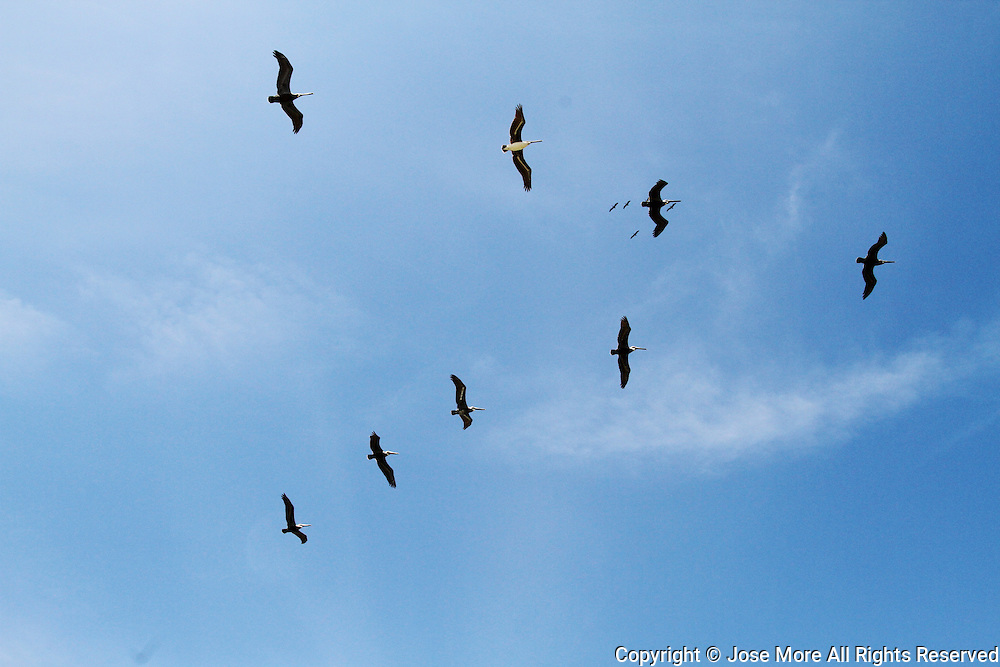 Brown pelicans fly over beach goers enjoy the sun in South Florida. Photography by Jose More