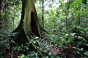 View of the rainforest in the Okapi Reserve at Epulu, a Unesco World Heritage site, May 27, 2009. ©Daniel Beltra