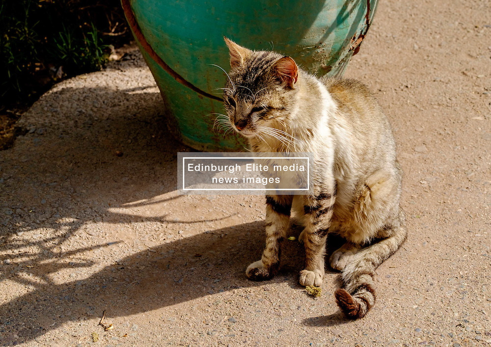 A cat sitting in the gardens of the Bahia Palace in Marrakech, Morocco, North Africa<br /> <br /> <br /> (c) Andrew Wilson   Edinburgh Elite media