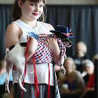Addison Wilson, 10, entered her dog Biscuit into Saturday's Elvisfest Pet Parade held by Dilworth Small Animal Hospital
