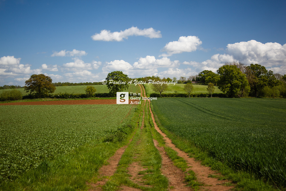 A farm track through green fields in Oxfordshire. Blue sunny skies, and symmetrical composition.