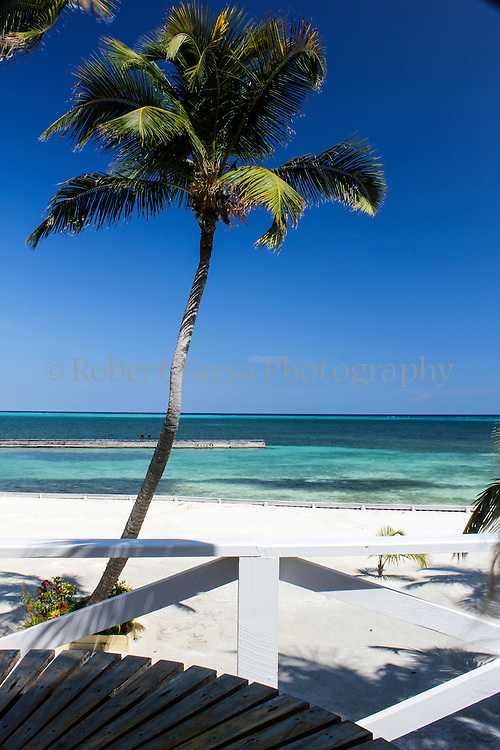 Palm tree on Belize island resort.