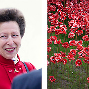 Anne, Princess Royal and the 888,246 ceramic poppies to mark WW1 centenary at Tower Bridge, London, 07 November 2014