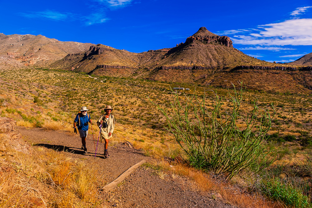 Hikers pass by ocotillos (desert plants), Homer Wilson Ranch in background, Chihuahuan Desert, Ross Maxwell Scenic Drive in Big Bend National Park, Texas USA.