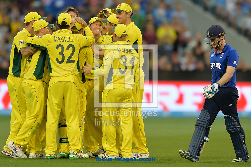 Australia celebrate the wicket of James Taylor during the 2015 ICC Cricket World Cup match at Melbourne Cricket Ground, Melbourne<br /> Picture by Frank Khamees/Focus Images Ltd +61 431 119 134<br /> 14/02/2015