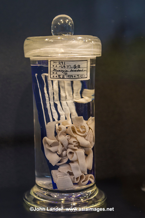 The only place in the world entirely devoted to parasites, the Meguro Parasitological Museum has become a popular offbeat attraction. The museum has over 45,000 specimens in its collection.<br /> The prize attraction is the world&rsquo;s longest tapeworm.