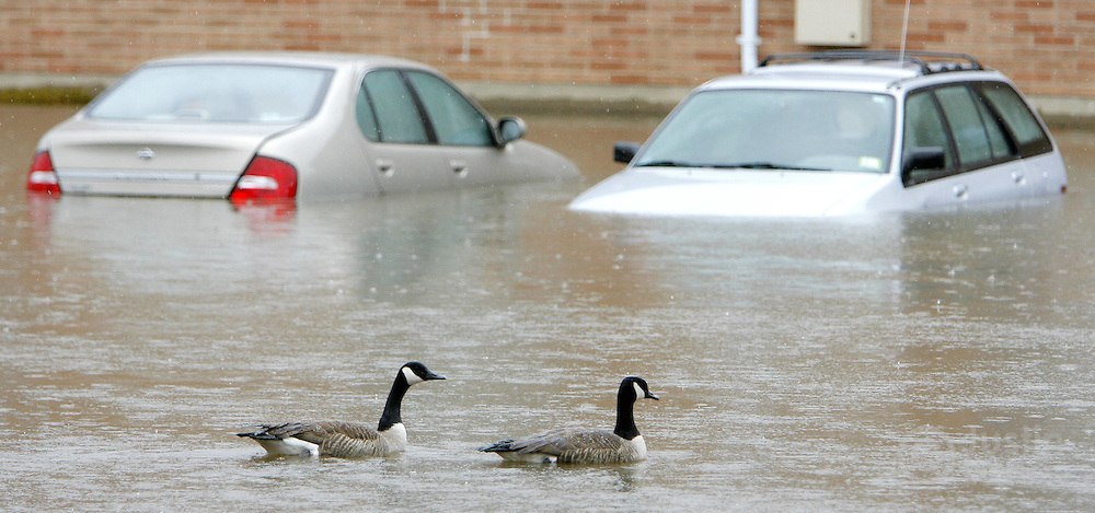 Two swans float past two cars in a flooded parking lot at a housing development in New Milford, New Jersey on Monday 16 April 2007. A large storm delivered records amount of rain to the East Coast of the United States over the weekend and today, causing New Jersey to declare a state of emergency.