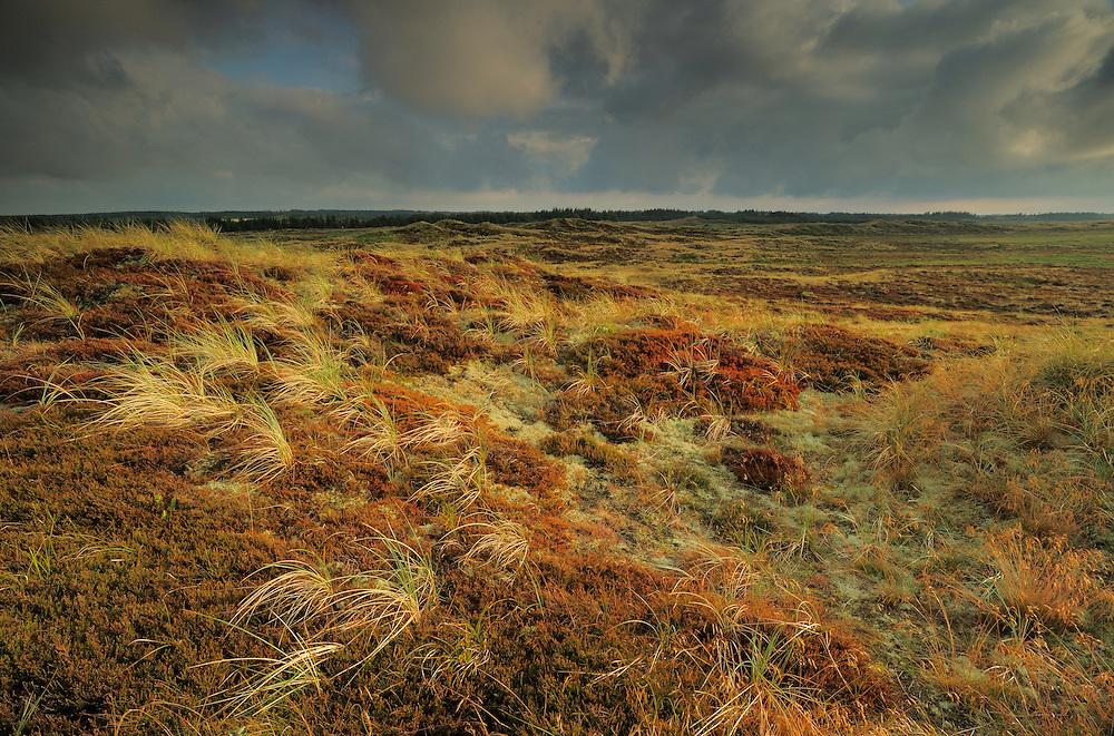 Ålvand Dune Heath - National Park Thy, Denmark