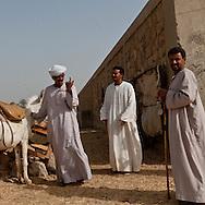 Daraw  camel market near the Nile river.   Daraw  Egypt    /  marche aux chameaux de Daraw  au bord du Nil.    Daraw  Egypte