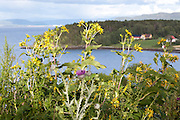 The yellow flowers are Silphium perfoliatum, cup plant. Norwegian: skålplante.