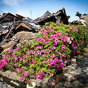 KUMAMOTO, JAPAN - APRIL 20: A collapsed house is seen after an earthquake in the morning on April 20, 2016 in Mashiki town, Kumamoto, Japan. As of April 45 people were confirmed dead after strong earthquakes rocked Kyushu Island of Japan. Nearly 11,000 people are reportedly evacuated after the tremors Thursday night at magnitude 6.5 and followed by another magnitude 7.3 on early morning Saturday.                                                                    <br /> <br /> Photo: Richard Atrero de Guzman
