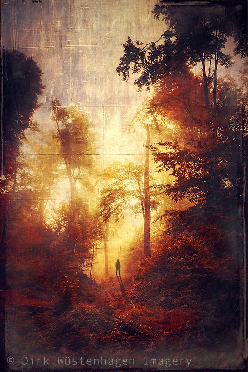 Surreal scenery in autumn colours<br /> <br /> Prints: http://society6.com/DirkWuestenhagenImagery/mezzanine-7Qu_Print#1=45
