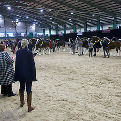 Shire Horse Society Spring Show 2017 <br />