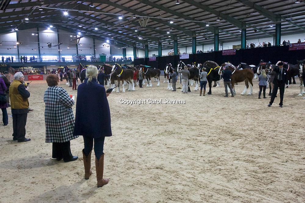 Shire Horse Society Spring Show 2017 <br /> Sunday Grand Parade<br /> In the foreground L to R  Mike Tucker, Delma Nulty and Victoria Clayton