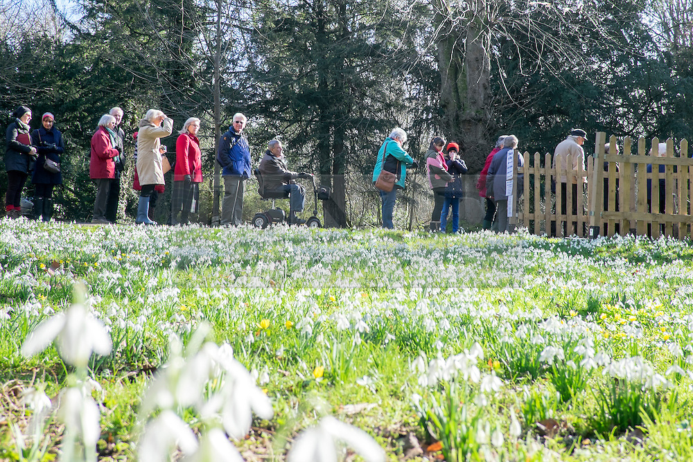 © Licensed to London News Pictures. 18/02/2015. Welford, UK People queue at the entrance to see snowdrops in bloom at Welford Park in Berkshire today 18th February 2015. The Galanthus Nivalis display at Welford Park is in a beech wood covering approximately 5 acres alongside the River Lambourn. Photo credit : Stephen Simpson/LNP