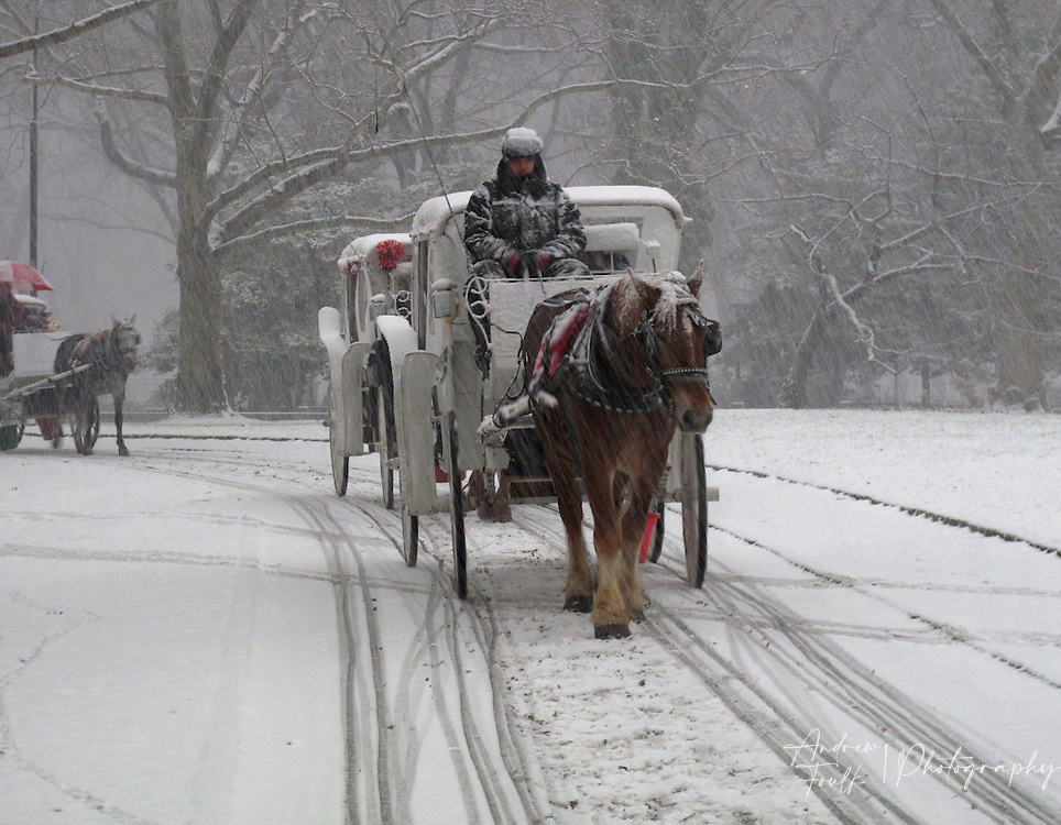 A house drawn carriage moves through a snow storm in Central Park, New York, NY.