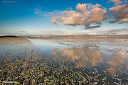 At low tide in the Afon Braint Estuary, Anglesey North Wales at sunset. Millions of tiny shells and Ragworm casts are revealed on the vast expanse of sand and silt. Oystercatchers, Curlews and numerous other waders feed on this vast expanse of rich estuary. Shallow rivers and streams of warm water continue to flow down to the low tide mark even as the tide starts to rise once again.
