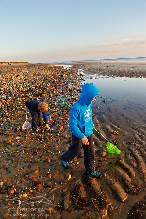 A young boy and girl hunt for crabs on Bound Brook Island, Cape Cod National Seashore, Wellfleet, Massachusetts.