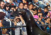 A rather large seal performing at the Coney Island Aquarium. August, 2011.