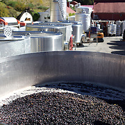 Pinot Noir grapes harvested at The Gibbston Valley vineyard in Gibbston Valley, Central Otago. The winery includes a cave which has been blasted out of the solid schist of the Central Otago mountains, and creates an ideal natural environment to mature award-winning wines, Gibbston Valley Wines,  Queenstown, Central Otago, New Zealand. 23rd March  2011. Photo Tim Clayton.