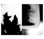 Self in diptych
